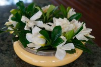 Gardenias which have short stems look glorious in this bowl.